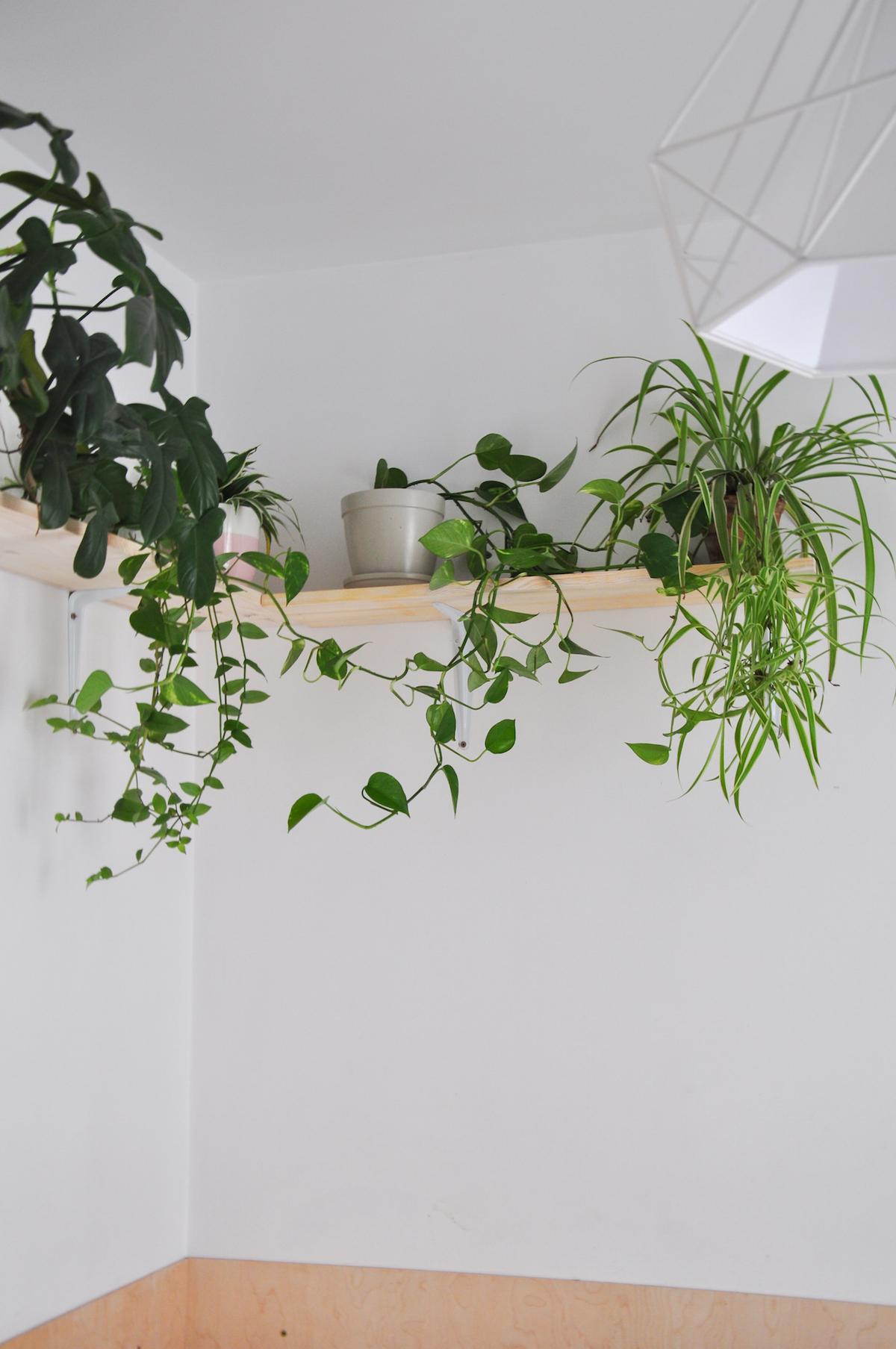 tikkurila_jak-eksponować-rośliny_10
