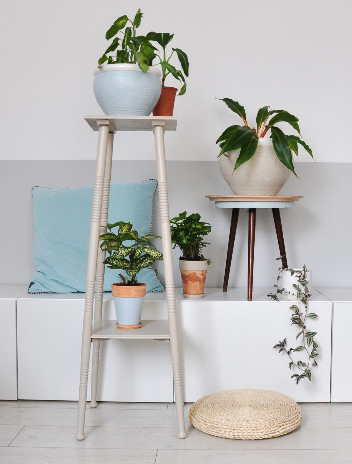 tikkurila_jak-eksponować-rośliny_11