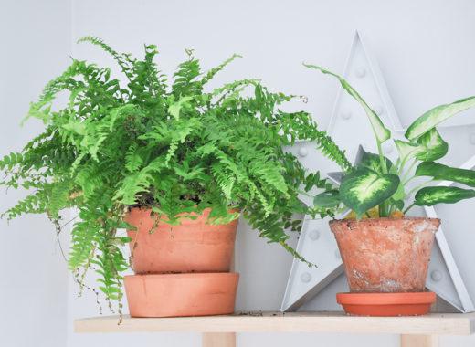 tikkurila_jak-eksponować-rośliny_6