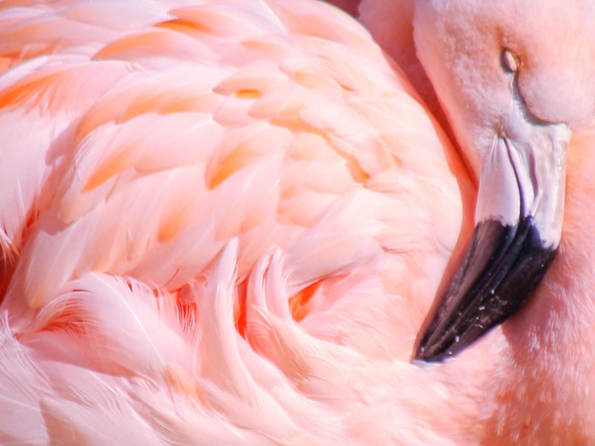 kolekcja-tikkurila-color-now-2019-Flamingo