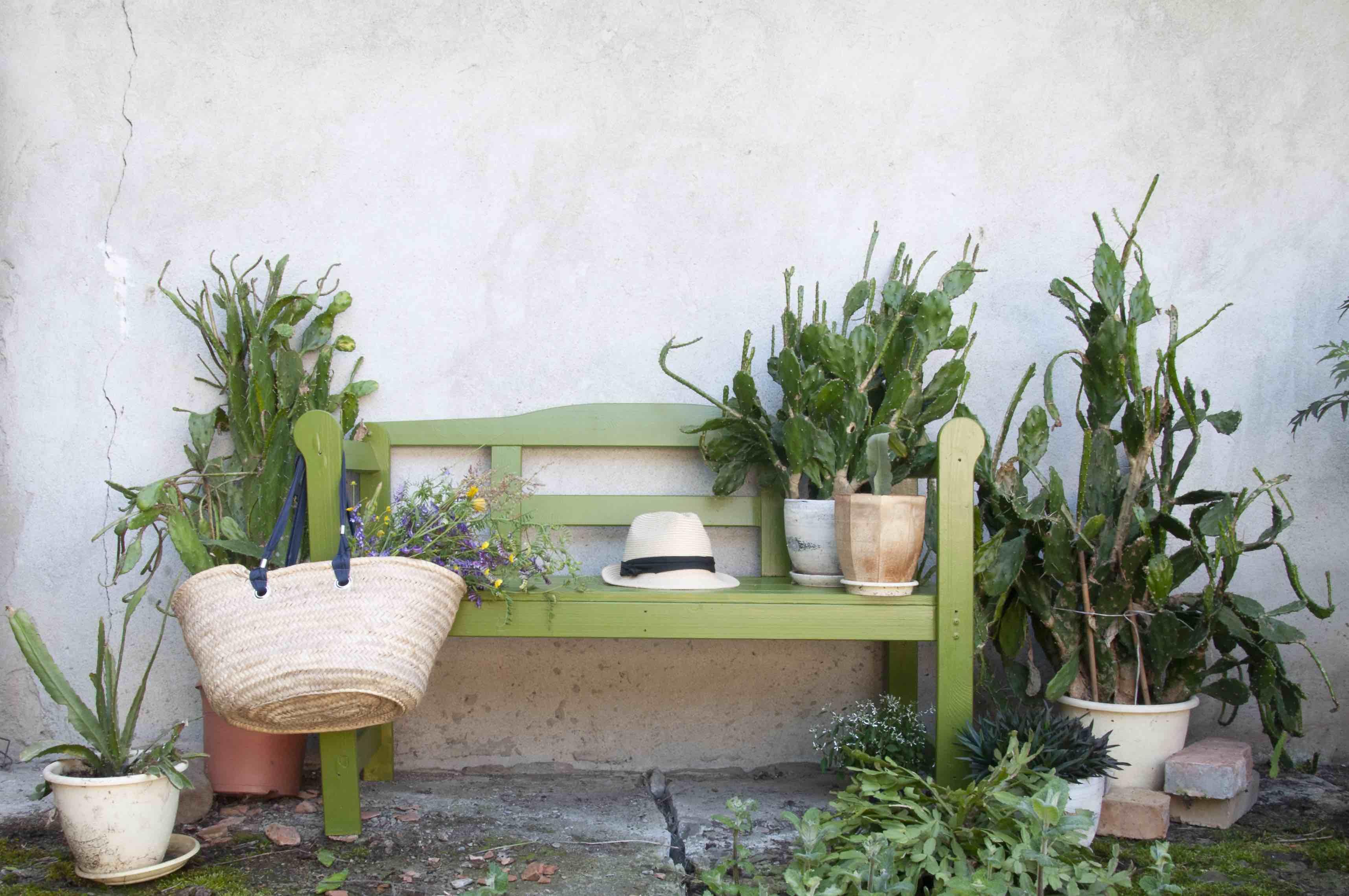 zielenie we wnętrzach